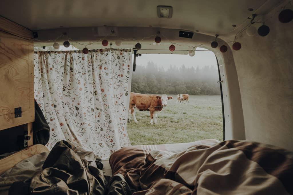 Vanlife Ausblick Kuh Vorhang Lichterkette
